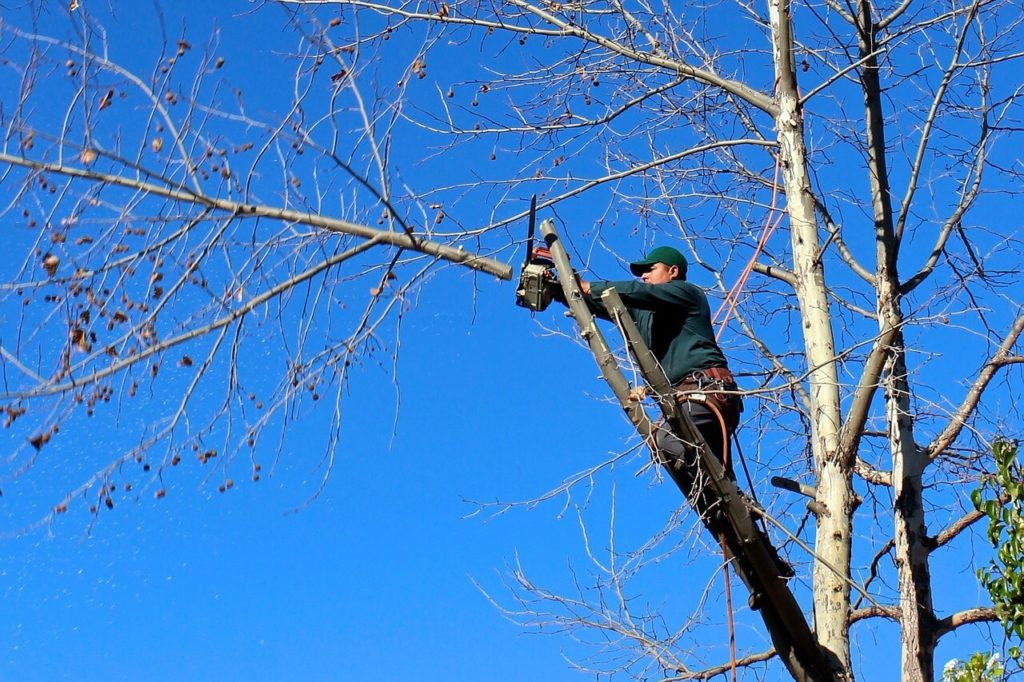 Contact Us-Pompano Beach FL Tree Trimming and Stump Grinding Services-We Offer Tree Trimming Services, Tree Removal, Tree Pruning, Tree Cutting, Residential and Commercial Tree Trimming Services, Storm Damage, Emergency Tree Removal, Land Clearing, Tree Companies, Tree Care Service, Stump Grinding, and we're the Best Tree Trimming Company Near You Guaranteed!