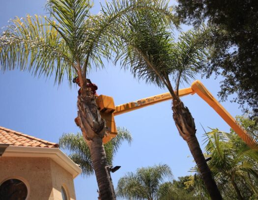 Palm Tree Trimming-Pompano Beach FL Tree Trimming and Stump Grinding Services-We Offer Tree Trimming Services, Tree Removal, Tree Pruning, Tree Cutting, Residential and Commercial Tree Trimming Services, Storm Damage, Emergency Tree Removal, Land Clearing, Tree Companies, Tree Care Service, Stump Grinding, and we're the Best Tree Trimming Company Near You Guaranteed!