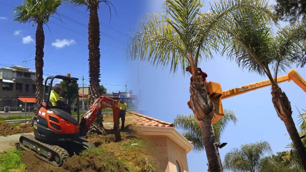 Palm tree trimming & palm tree removal-Pompano Beach FL Tree Trimming and Stump Grinding Services-We Offer Tree Trimming Services, Tree Removal, Tree Pruning, Tree Cutting, Residential and Commercial Tree Trimming Services, Storm Damage, Emergency Tree Removal, Land Clearing, Tree Companies, Tree Care Service, Stump Grinding, and we're the Best Tree Trimming Company Near You Guaranteed!