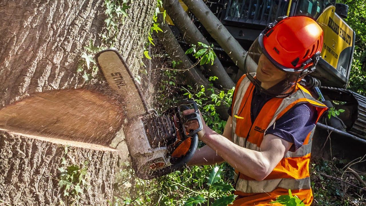 Pompano-Beach-FL-Tree-Trimming-and-Stump-Grinding-Services-Home-Page-Image-We Offer Tree Trimming Services, Tree Removal, Tree Pruning, Tree Cutting, Residential and Commercial Tree Trimming Services, Storm Damage, Emergency Tree Removal, Land Clearing, Tree Companies, Tree Care Service, Stump Grinding, and we're the Best Tree Trimming Company Near You Guaranteed!