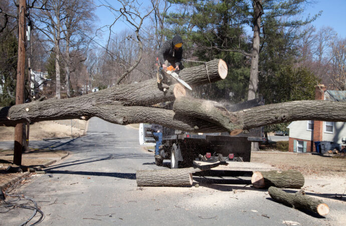 Residential Tree Services-Pompano Beach FL Tree Trimming and Stump Grinding Services-We Offer Tree Trimming Services, Tree Removal, Tree Pruning, Tree Cutting, Residential and Commercial Tree Trimming Services, Storm Damage, Emergency Tree Removal, Land Clearing, Tree Companies, Tree Care Service, Stump Grinding, and we're the Best Tree Trimming Company Near You Guaranteed!