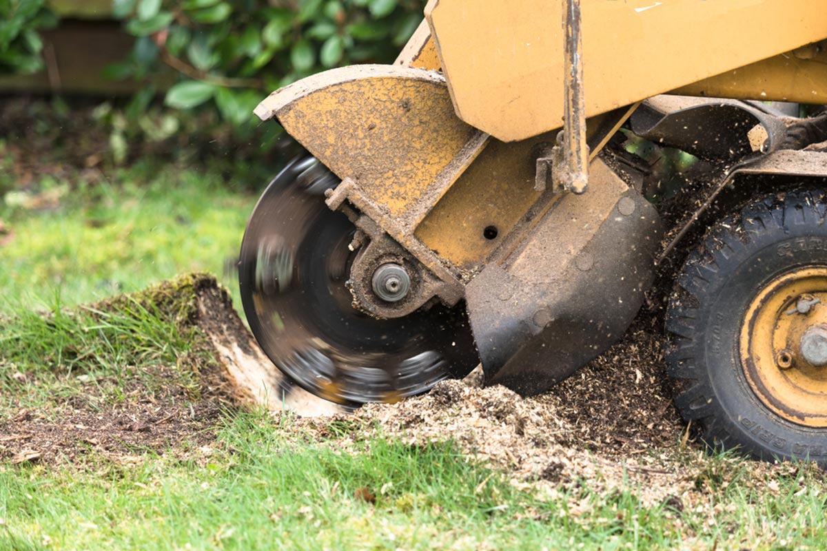 Stump Grinding-Pompano Beach FL Tree Trimming and Stump Grinding Services-We Offer Tree Trimming Services, Tree Removal, Tree Pruning, Tree Cutting, Residential and Commercial Tree Trimming Services, Storm Damage, Emergency Tree Removal, Land Clearing, Tree Companies, Tree Care Service, Stump Grinding, and we're the Best Tree Trimming Company Near You Guaranteed!