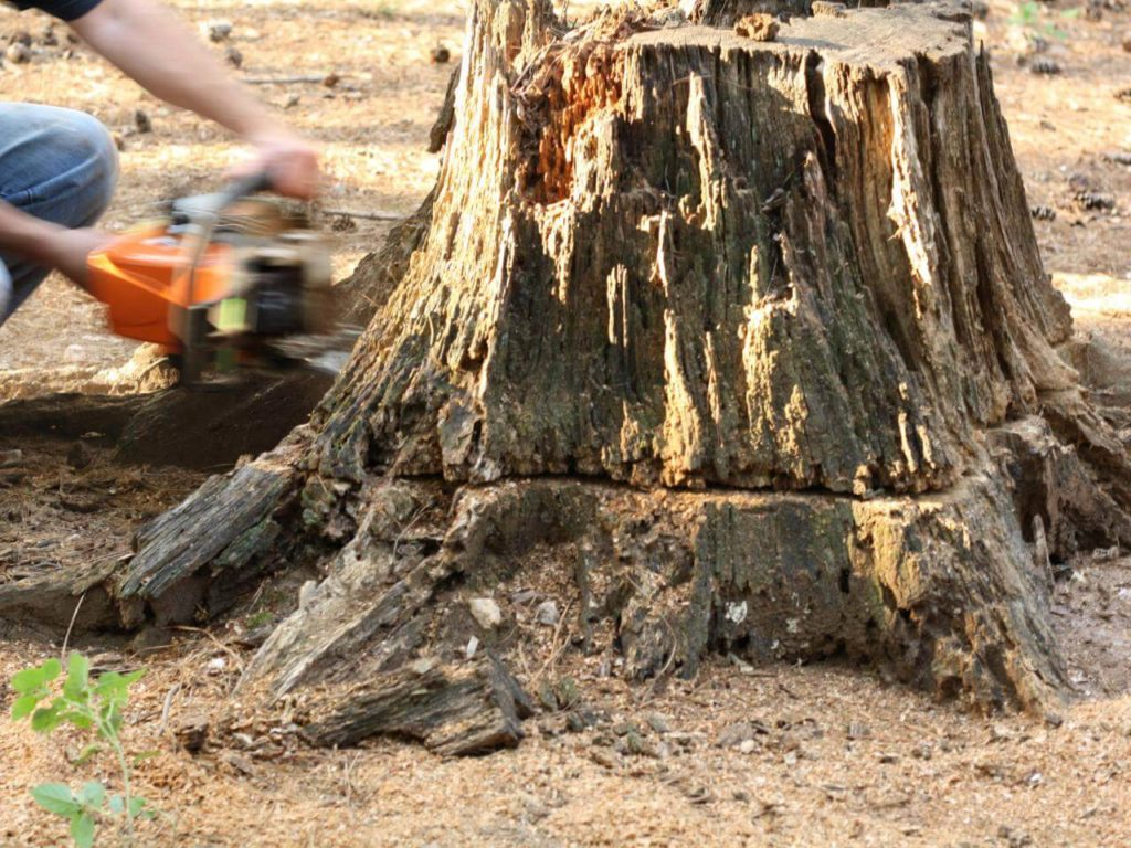 Stump Removal-Pompano Beach FL Tree Trimming and Stump Grinding Services-We Offer Tree Trimming Services, Tree Removal, Tree Pruning, Tree Cutting, Residential and Commercial Tree Trimming Services, Storm Damage, Emergency Tree Removal, Land Clearing, Tree Companies, Tree Care Service, Stump Grinding, and we're the Best Tree Trimming Company Near You Guaranteed!