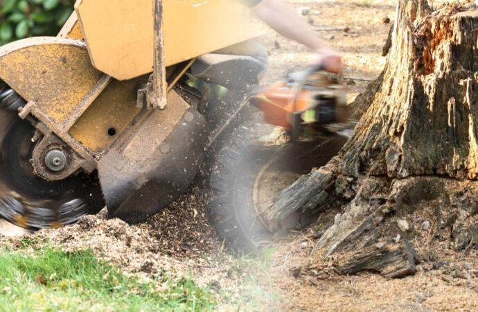 Stump grinding & removal-Pompano Beach FL Tree Trimming and Stump Grinding Services-We Offer Tree Trimming Services, Tree Removal, Tree Pruning, Tree Cutting, Residential and Commercial Tree Trimming Services, Storm Damage, Emergency Tree Removal, Land Clearing, Tree Companies, Tree Care Service, Stump Grinding, and we're the Best Tree Trimming Company Near You Guaranteed!