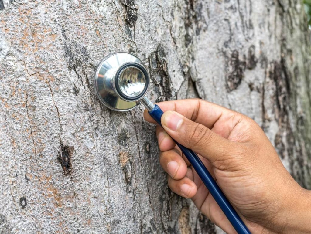 Tree Assessments-Pompano Beach FL Tree Trimming and Stump Grinding Services-We Offer Tree Trimming Services, Tree Removal, Tree Pruning, Tree Cutting, Residential and Commercial Tree Trimming Services, Storm Damage, Emergency Tree Removal, Land Clearing, Tree Companies, Tree Care Service, Stump Grinding, and we're the Best Tree Trimming Company Near You Guaranteed!