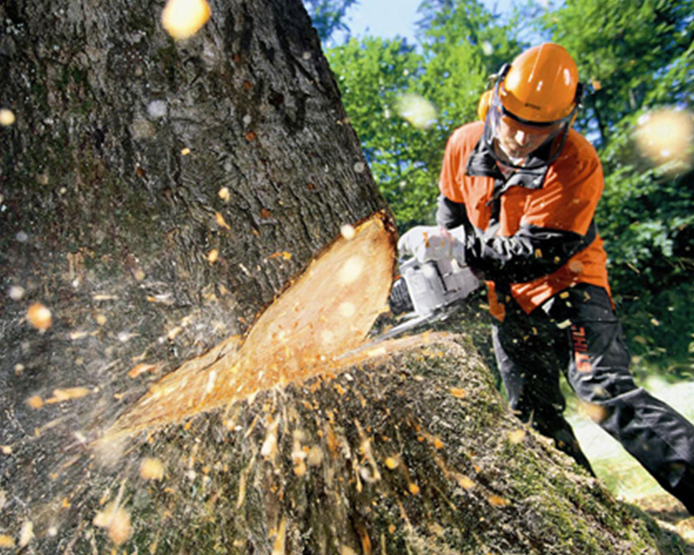 Tree Cutting-Pompano Beach FL Tree Trimming and Stump Grinding Services-We Offer Tree Trimming Services, Tree Removal, Tree Pruning, Tree Cutting, Residential and Commercial Tree Trimming Services, Storm Damage, Emergency Tree Removal, Land Clearing, Tree Companies, Tree Care Service, Stump Grinding, and we're the Best Tree Trimming Company Near You Guaranteed!