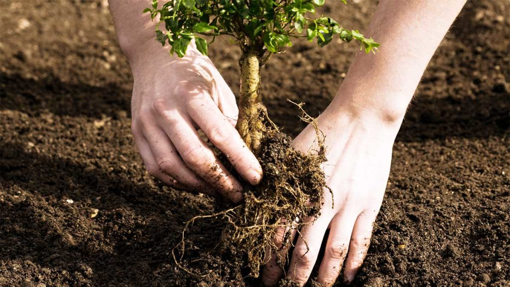 Tree Planting-Pompano Beach FL Tree Trimming and Stump Grinding Services-We Offer Tree Trimming Services, Tree Removal, Tree Pruning, Tree Cutting, Residential and Commercial Tree Trimming Services, Storm Damage, Emergency Tree Removal, Land Clearing, Tree Companies, Tree Care Service, Stump Grinding, and we're the Best Tree Trimming Company Near You Guaranteed!