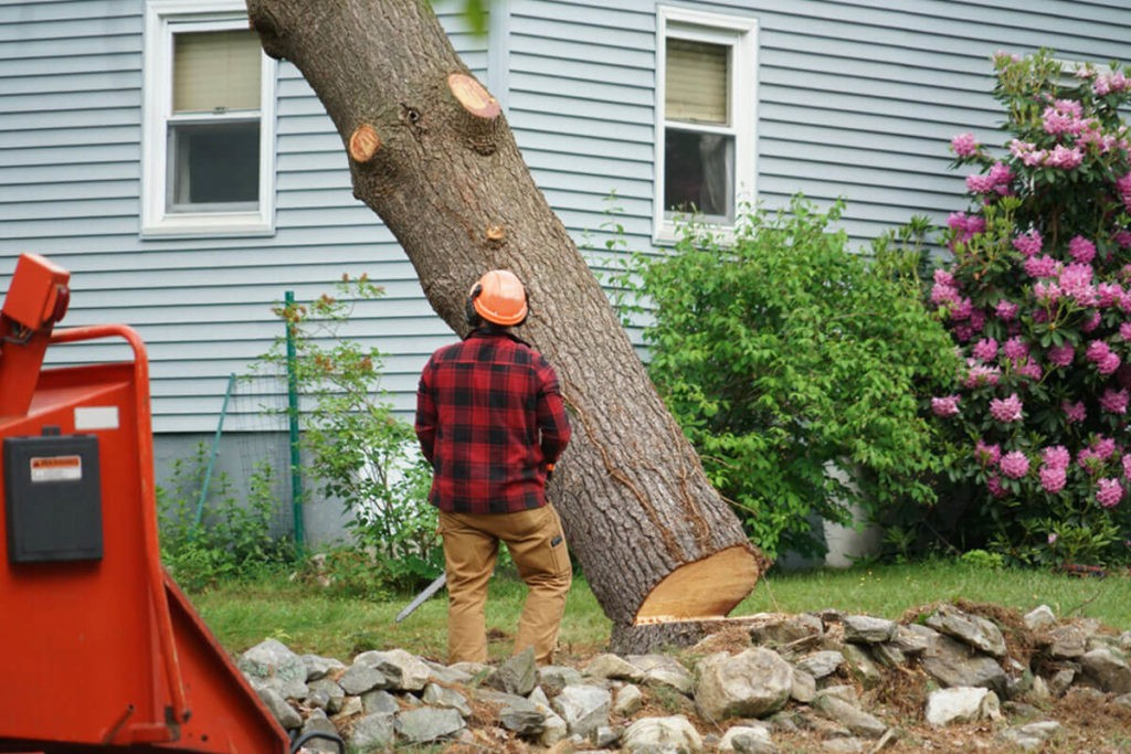 Tree Removal-Pompano Beach FL Tree Trimming and Stump Grinding Services-We Offer Tree Trimming Services, Tree Removal, Tree Pruning, Tree Cutting, Residential and Commercial Tree Trimming Services, Storm Damage, Emergency Tree Removal, Land Clearing, Tree Companies, Tree Care Service, Stump Grinding, and we're the Best Tree Trimming Company Near You Guaranteed!