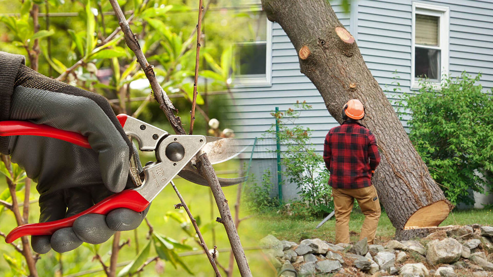 Tree pruning & tree removal-Pompano Beach FL Tree Trimming and Stump Grinding Services-We Offer Tree Trimming Services, Tree Removal, Tree Pruning, Tree Cutting, Residential and Commercial Tree Trimming Services, Storm Damage, Emergency Tree Removal, Land Clearing, Tree Companies, Tree Care Service, Stump Grinding, and we're the Best Tree Trimming Company Near You Guaranteed!